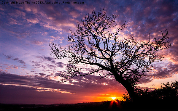Oak Tree Sunset Canvas Print by Lee Thorne