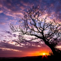 Buy canvas prints of Oak Tree Sunset by Lee Thorne