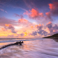 Buy canvas prints of Driftwood I by Lee Thorne