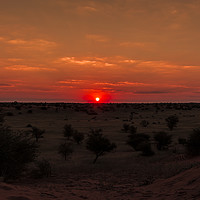 Buy canvas prints of Sunset in Etosha National Park by colin chalkley