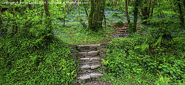 Broom Wood, Abermawr, Pembrokeshire Canvas print by Barrie Foster