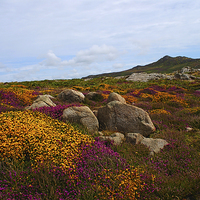 Buy canvas prints of  Moorland on St Davids Head by Barrie Foster