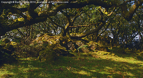 Tŷ Canol  Ancient Woodland Canvas print by Barrie Foster