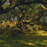 Buy canvas prints of Tŷ Canol  Ancient Woodland by Barrie Foster