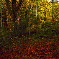 Buy canvas prints of Little Milford Woods #3 by Barrie Foster