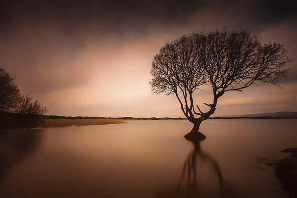 Kenfig pool and tree Canvas Print by Leighton Collins