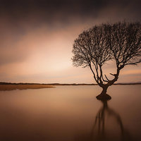 Buy canvas prints of  Kenfig pool and tree by Leighton Collins