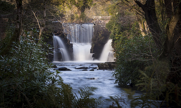 Penllergaer waterfall Swansea Canvas print by Leighton Collins