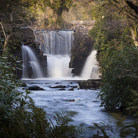 Buy canvas prints of  Penllergaer waterfall Swansea by Leighton Collins