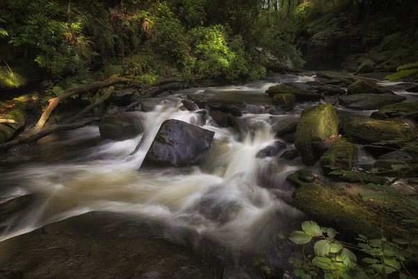 The Upper Clydach River in Swansea Canvas print by Leighton Collins
