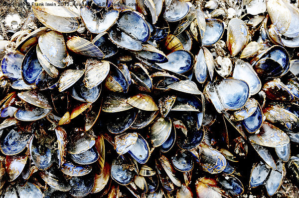 A host of empty Mussels Shells Canvas Print by Frank Irwin