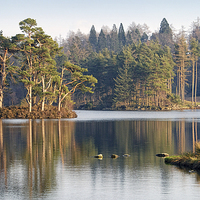 Buy canvas prints of Tarn Hows, Lake District, Cumbria by Martin Parratt