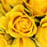 Buy canvas prints of Yellow Roses by Paul Austen