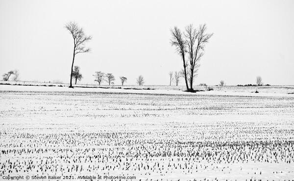 Trees in Snow 6 Framed Print by Steven Ralser