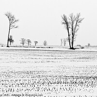 Buy canvas prints of Trees in Snow 6 by Steven Ralser