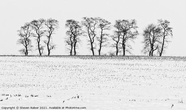 Trees in Snow 5 Framed Print by Steven Ralser