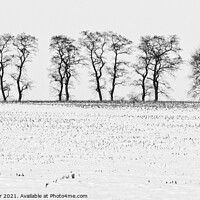 Buy canvas prints of Trees in Snow 5 by Steven Ralser