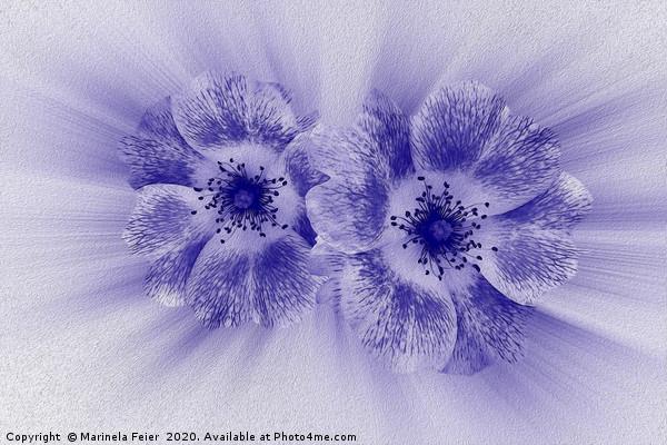 Flower in blue Canvas print by Marinela Feier