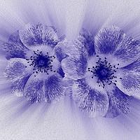 Buy canvas prints of Flower in blue by Marinela Feier