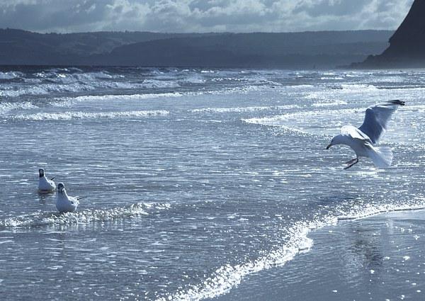 Seagulls on Sandy Bay Canvas print by leonard alexander