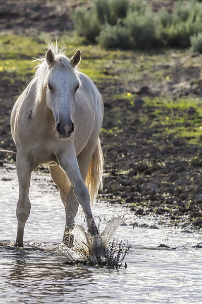 Traveler Making a Splash Framed Print by Belinda Greb