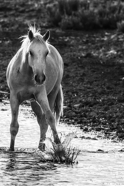 Traveler Making a Splash bw Framed Print by Belinda Greb