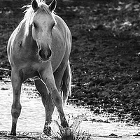 Buy canvas prints of Traveler Making a Splash bw by Belinda Greb