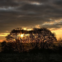 Buy canvas prints of Sunrise Through Trees by Richard Cruttwell