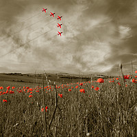 Buy canvas prints of Red Arrows over Poppy Field by Scott Anderson