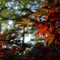 Buy canvas prints of Autumn leaves by dan ward