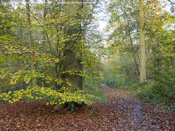 An Autumn Glade at Flaunden, Hertfordshire. Canvas Print by Elizabeth Debenham