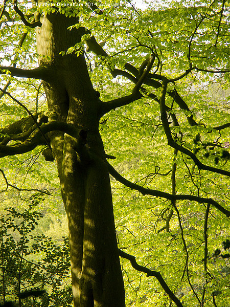 The Beauty of a Beech Tree in May Canvas Print by Elizabeth Debenham