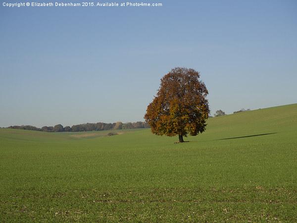 Lone Beech Tree in a field Canvas Print by Elizabeth Debenham