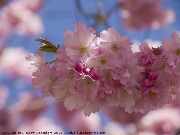 Romantic Spring blossom Canvas Print by Elizabeth Debenham