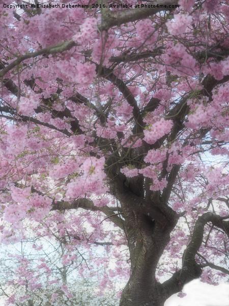 Softly focused Prunus blossom. Canvas print by Elizabeth Debenham