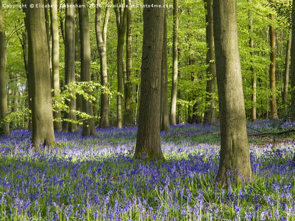 Bluebell Woodland in Bright Sunshine Canvas Print by Elizabeth Debenham