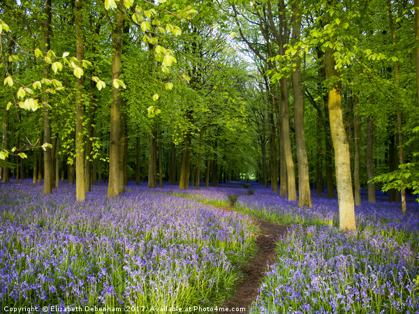 Bluebell wood heaven Canvas Print by Elizabeth Debenham