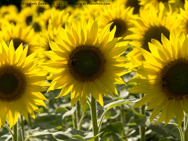 Sunflowers with Honey Bee Canvas print by Elizabeth Debenham