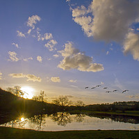 Buy canvas prints of Geese over Sarratt Water meadow at Sunset by Elizabeth Debenham