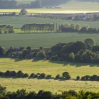 Buy canvas prints of Watlington Hill in early Summer by Elizabeth Debenham