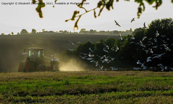 Gulls following a Tractor  Print by Elizabeth Debenham