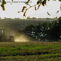 Buy canvas prints of Gulls following a Tractor  by Elizabeth Debenham