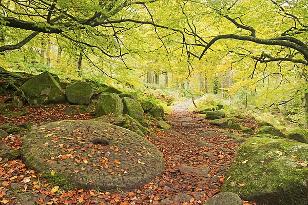 Autumn Path Canvas print by Matt Cottam