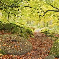Buy canvas prints of Autumn Path by Matt Cottam