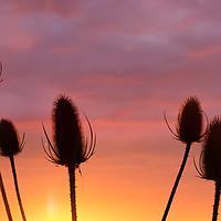 Buy canvas prints of Thistle sunrise silhouette by Matt Cottam