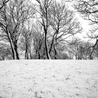Buy canvas prints of Trees by Victor Burnside