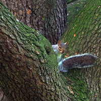 Buy canvas prints of Squirrel by Victor Burnside