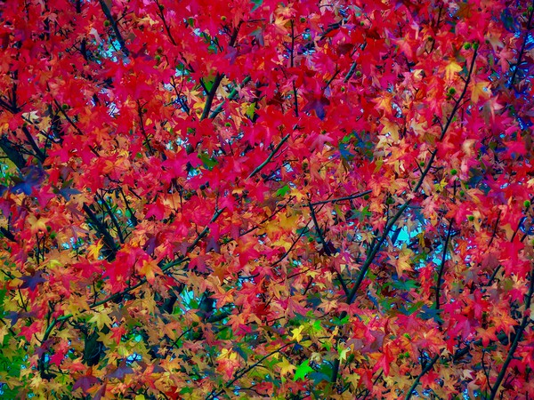 Autumn Leaves   Canvas Print by Victor Burnside