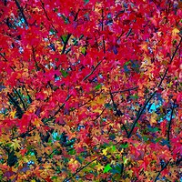 Buy canvas prints of Autumn Leaves   by Victor Burnside
