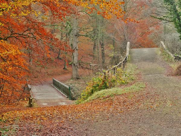 Autumn Woodland     Canvas Print by Victor Burnside